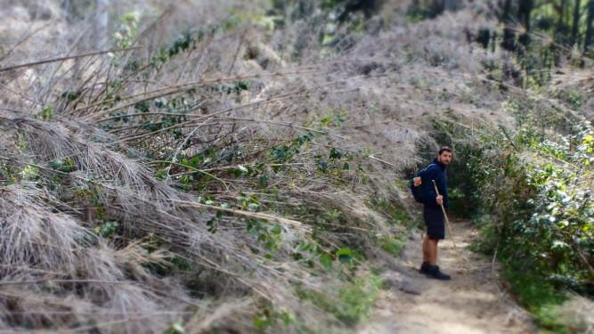 Cerro Llao Llao Trek - bamboo