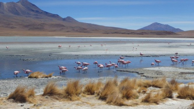 lagunas-flamingos