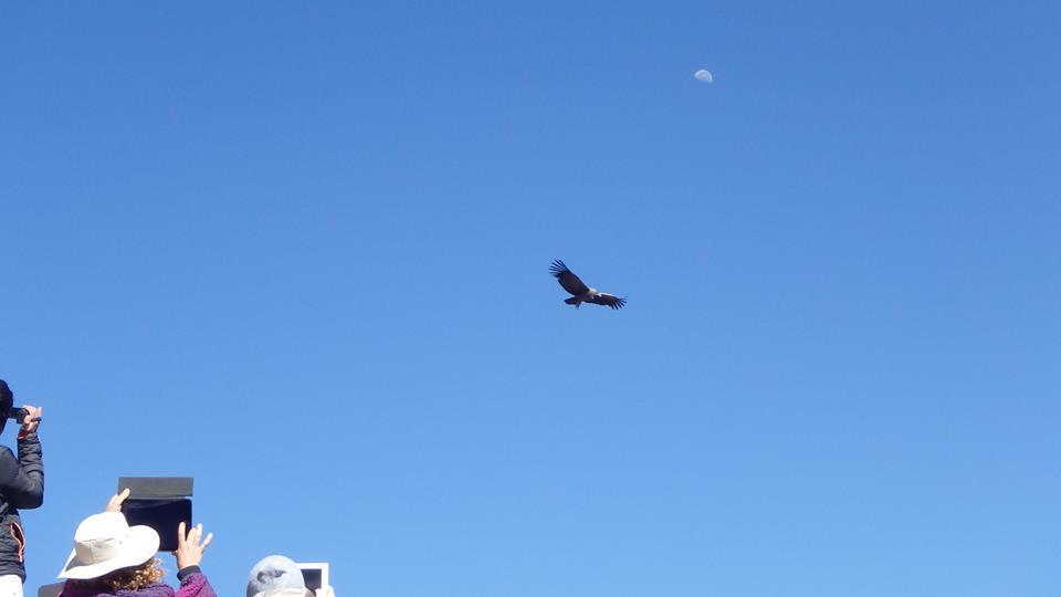 tourists spotting condors
