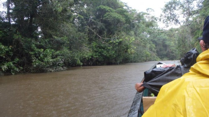 raining rainforest