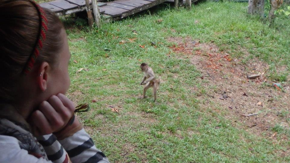 amazon monkeys 2
