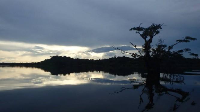 Amazon tree reflection