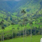 The Place Beyond the Palms: Cocora Valley, Salento, Colombia